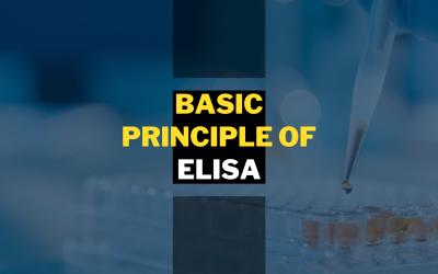 Basic Principle of ELISA